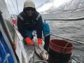 lofoten sail and splitboarding camp fishing
